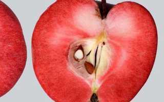 Яблоня сирена описание сорта