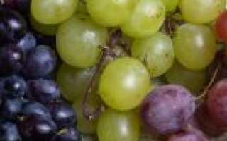 Сорта белого винограда для вина