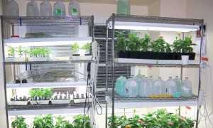 Стеллаж для растений