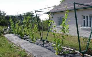 Шпалера для винограда своими руками: как сделать деревянную для вьющихся растений