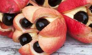 Тест на знание экзотических фруктов: не так прост, каким кажется