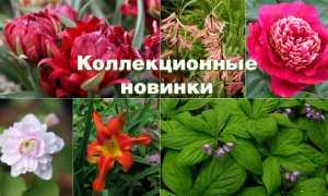 Редкие садовые цветы