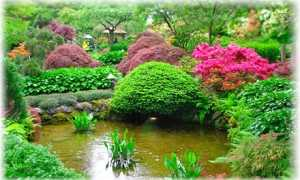 Декоративные растения