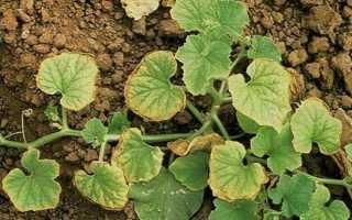 Марганец (Mn), как удобрение для растений, применение, необходимые дозы, рекомендации
