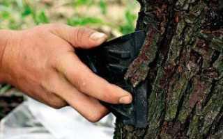 Приготовление лечебных отваров из коры деревьев, правильная заготовка коры