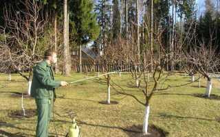 Опрыскивание абрикоса весной во время цветения: чем и когда обрабатывать от вредителей, весенняя обработка от болезней