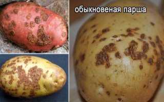 Парша на картофеле: как бороться, чем обрабатывать, какие удобрения и препараты
