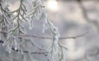 Укрывной материал для туй на зиму