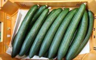 Длинные огурцы – сорта длиннопродных, салатных, тонких огурцов
