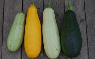 Чем отличается цуккини от кабачка по полезным свойствам