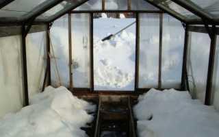 Теплицы зимой: нужно ли накидывать снег в теплицу?