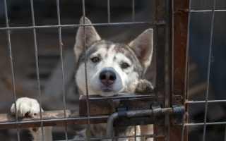 В Воронеже открылась первая в России душевая для животных видео