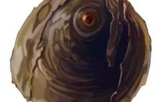 Ложнокалифорнийская щитовка, описание, фото, чем опасна, меры борьбы, профилактика