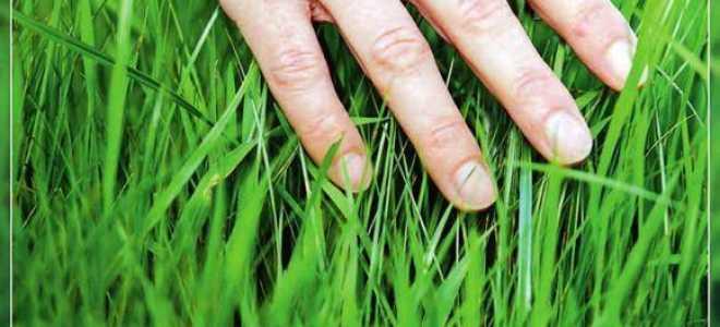 Характерные ошибки при выращивании трав