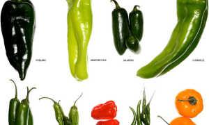 Таблица остроты перцев