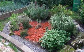Выращивание пряных трав на грядках и в мешках