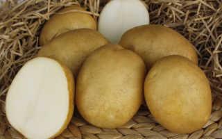 Картофель – Лидер – (19 фото): характеристика и описание сорта, вкусовые качества и отзывы