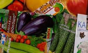 В какие сроки в 2020г. сажать рассаду томатов, перца, баклажан, огурцов?
