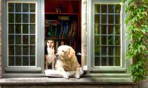 Маленькие собаки для дома