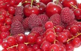 Кустарники с красными ягодами