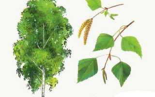 Осенние деревья названия