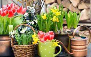 Растения для выгонки, выгоночные культуры, группы растений