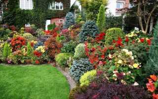 Цветы в огороде и на даче