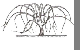 Виды формировки виноградного куста