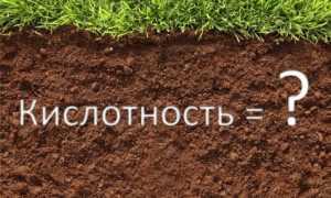 Почва для перца: оптимальные параметры (кислотность, влажность)