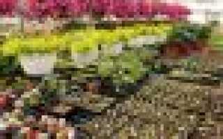 Кокосовые маты для водоемов, описание, фото, применение