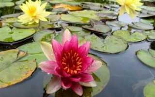 Болотные растения впитывающие воду называются