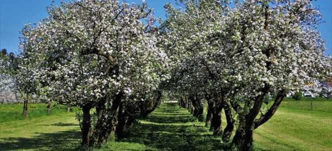 Препараты для обработки сада: пошаговая инструкция, сроки, весной, осенью